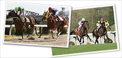 地方競馬の特徴