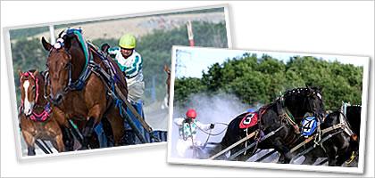 世界にひとつの「ばんえい競馬」